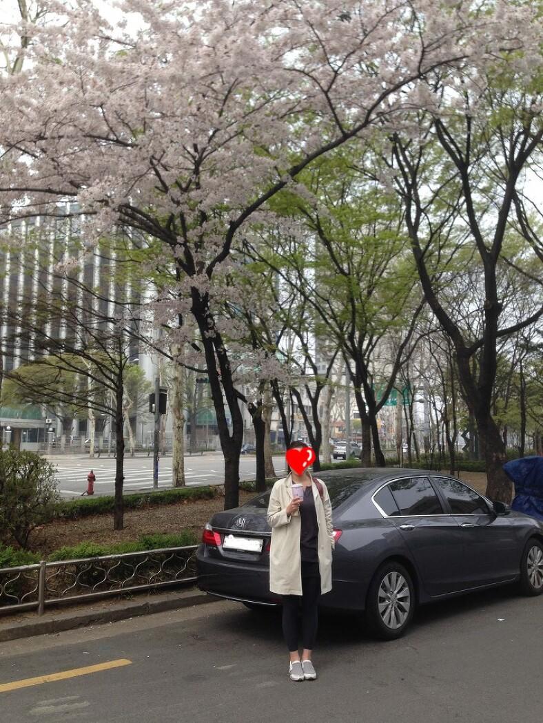 동네 벚꽃 아래에서 4월과 함께