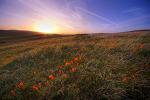 20100320 California Poppy Reserve