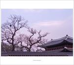 #04. 창덕궁[昌德宮]의 봄
