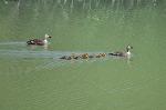 올림픽공원 오리가족 청솔모 청딱따구리