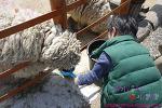 [평창]아이와 가볼만한 곳 - 아기동물농장