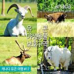 캐나다 동물 만나러 가요!~ 유콘 야생동물 보호지역 (Yukon Wildlife Preserve) & 타키니 온천(Takhini Hot Springs)