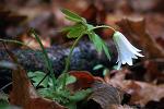봄을 알리는 청계산 야생화