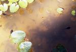[행복찾기] 개구리 올챙이 적 생각 못한다/함양 용추사 올챙이/개구리 올챙이 시절 모른다/죽풍원의 행복찾기프로젝트