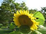 무더위를 즐기는 능가사의 꽃