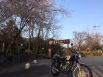 빅싱글 혼다 cb400ss와 벚꽃, 하오개로 라이딩, 클래식바이크, 운중농원