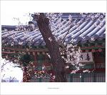 #05. 창덕궁[昌德宮]의 봄