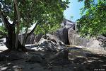 [세이셸 여행] 라디그섬 앙스수스다정의 알다브라 육지거북