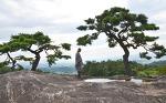 소나무가 있는 풍경