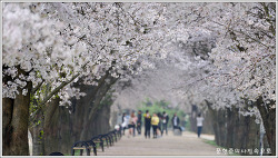 경북 안동 하회마을