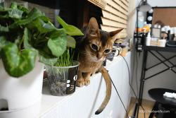 풀먹는 고양이 아미타
