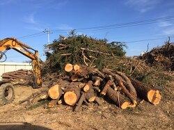 벌목, 제근, 임목 처리, 현장파쇄-동서산업