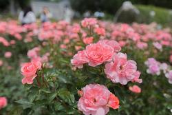 싱그러움 가득~ 에버랜드의 다양한 여름꽃 만나기!