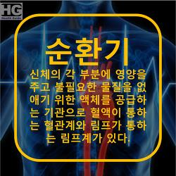 순환기 질환의 종류와 증상 필요영양소 : 심혈관, 심장, 고혈압, 저혈압