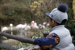 아이와 함께 에버랜드 동물원 생태 체험!