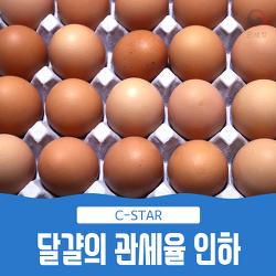 달걀 관세율 인하, 이유 있습니다!