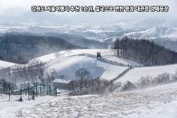 강원도 겨울여행지 추천 1순위, 설국으로 변한 평창 대관령 양떼목장