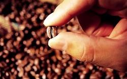 [의정부/커피] 의정부 커피전문점 창업 [합 1.5억/월순익 550만]