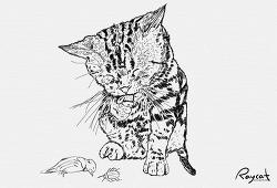 고양이가 당신에게 상납하는 2가지 이유