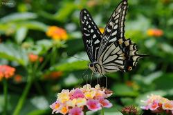 나비야! 나비야!