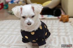 말티즈 강아지 꼬미의 어린이날 선물! 스니프, 마독 강아지옷 & 클레이몽드 강아지그릇!