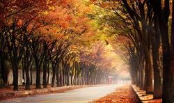 인천대공원의 가을