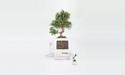 → 클래식 맥으로 작은 실내 정원을 만들다