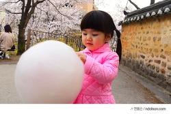 DSLR카메라 서울 벚꽃구경 솜사탕 들고 석촌호수 벚꽃사진 잘찍는 법