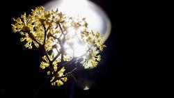 봄 밤에만 피는 꽃.