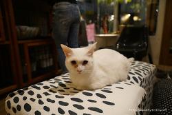 일본여행 후쿠오카 고양이카페 큐리그 유기묘들과.