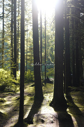 [Golden Ears Park]