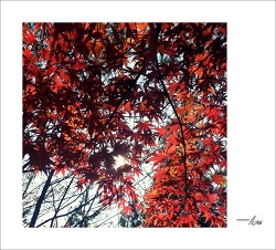 가을을 느끼며...#8