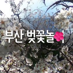 부산 벚꽃길 명소