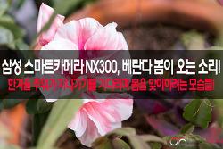 삼성 스마트카메라 NX300, 베란다 봄이 오는 소리를 담다!