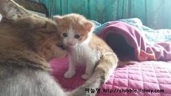 아기고양이 귀펴진 날 (부록:벨버드 젖병)