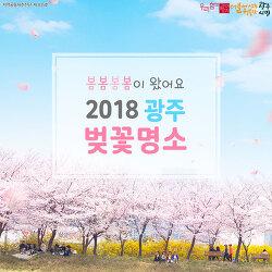 2018 광주 벚꽃 명소