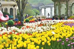 가장 먼저 만나는 봄, 에버랜드 '튤립 축제' 16일 오픈!