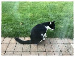 이웃집 고양이와 밀당을 하는 나~