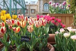 화려하게 수놓은 튤립세상! 에버랜드에서 봄을 만끽하다!