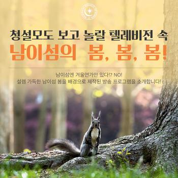 [남이섬 / 봄] 청설모도 보고 놀랄 텔레비전 속 남이섬의 봄, 봄, 봄!