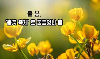 [봄축제/봄꽃놀이] 올 봄, 봄꽃 축제로 물들었나 봄