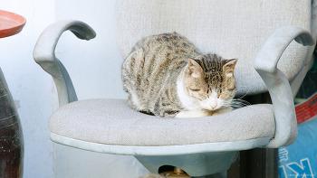 161129 고양이