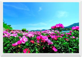 팡시온의 작약꽃 5ㅡ14