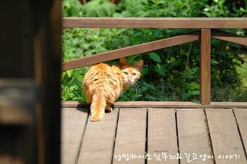아기 고양이 바람이
