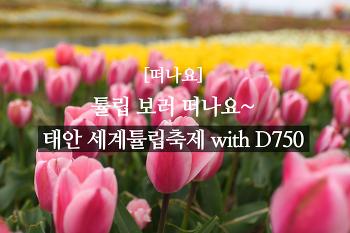 [떠나요] 튤립 보러 떠나요~ 태안 세계튤립축제 with D750