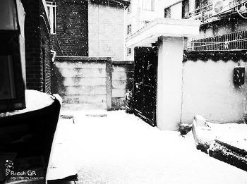 #20150209 : [gr] 눈이 펑펑 ,gr 흑백