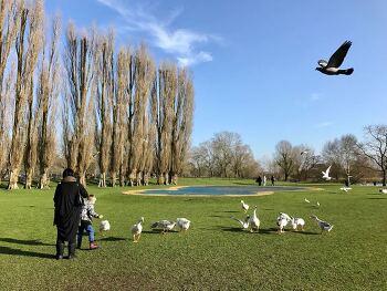 영국 공원의 다양한 동물들