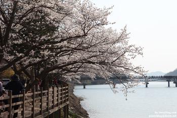 안동의 벚꽃놀이 명소, 가족나들이로 최고