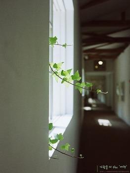 필름으로 보는 Ami Art Museum