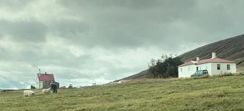 겨울왕국 아이슬란드의 양치기 형제 이야기, 영화 <램스>